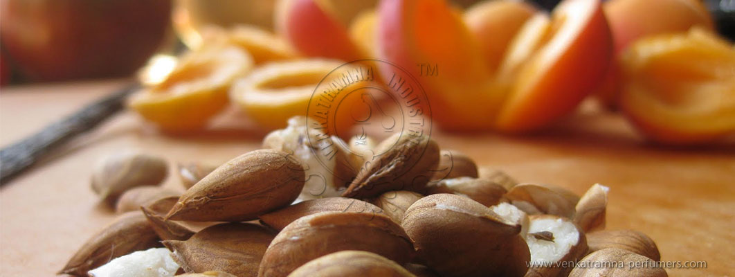 Apricot Kernels (Prunus Armeniaca) Pure Carrier Oil